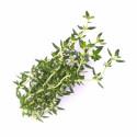 Organic Thyme Lingot®