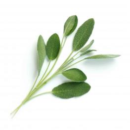 Bio-Salbei Lingot®