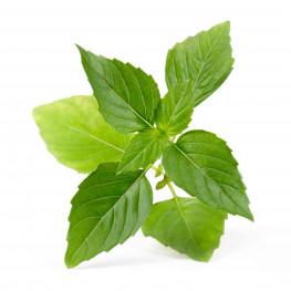 Bio-Thai-Basilikum Lingot®