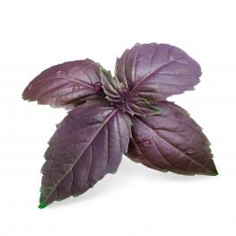 Bio-Purpur-Basilikum Lingot®
