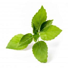 Bio-Zitronen-Basilikum Lingot®