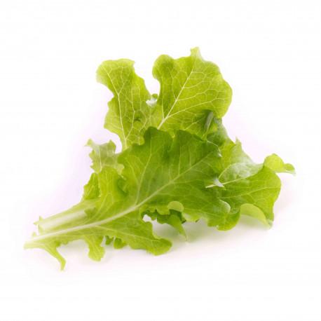 Bio-Eichblattsalat Lingot
