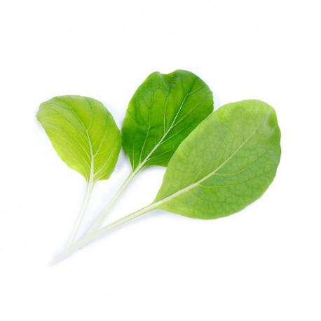 Organic Bok Choy Lingot®