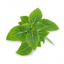 Lingot® Basilic Fin Vert BIO