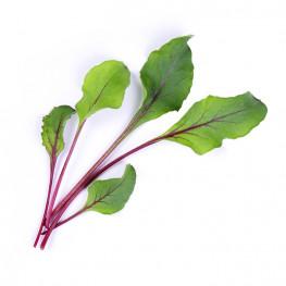 Organic Beet greens Lingot®