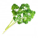 Organic Curly Parsley Lingot®