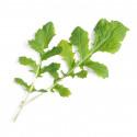 Organic Namenia Lingot®