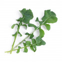 Organic Arugula Lingot®