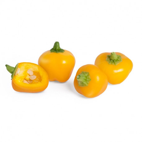 Lingot® Mini poivron jaune BIO