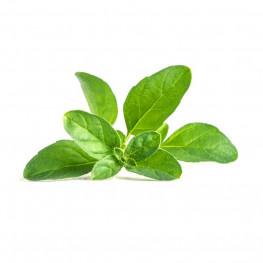 Organic pennyroyal Lingot®