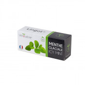 Organic Icy mint Lingot®
