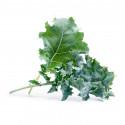 Organic Kale Lingot®