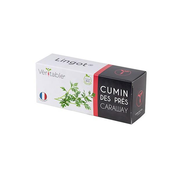 Lingot® Cumin des prés