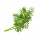 Organic Fennel Lingot®