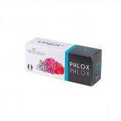 Lingot® Phlox