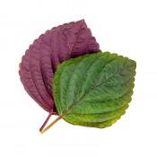 Lingot® Shiso bicolore