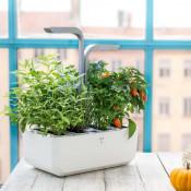 Smart Garten