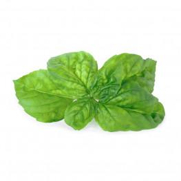 Lingot® Basilic Mammouth