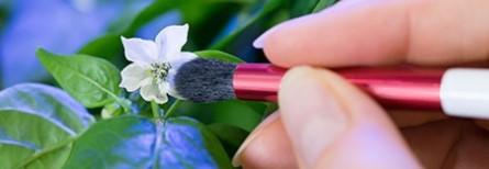 Pinceau pollinisation
